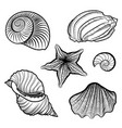various seashell starfish sea shell marine life vector image