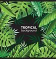 tropical leaves on black vector image vector image