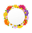 Colorful Gerbers Flower Banner vector image