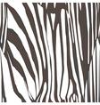 zebra skin pattern vector image