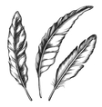 Black feathers Three objects vector image