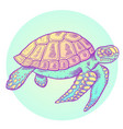 hand drawn sea turtle vector image