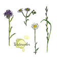 watercolor botanical set with wild flowers vector image
