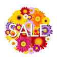 Colorful Gerbers Flowers Ball Sale vector image