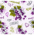 currant and splashes in watercolor style vector image