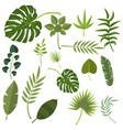 Tropical leaves green jungle vector image