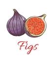 Figs fruits isolated botanical icon vector image