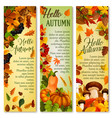 autumn falling leaf september forest banner vector image