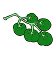 green tomatoes on vine vector image