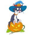 cat on halloween vector image