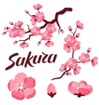 Japanese sakura set of branches and stylized vector image