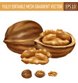 walnut on white background vector image