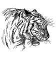 tiger head hand drawing vector image