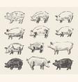 drawn pigs mangalica pork restaurant menu vector image