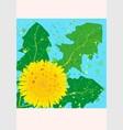 square card yellow dandelion vector image