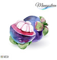 Mangosteen fruit vector image