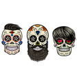 bearded skulls vector image