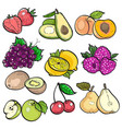 set collection color doodle of fruit vector image
