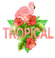 tropical banner with flamingo vector image