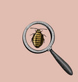 beetle under the magnify glass and virus or lady vector image