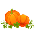 Two bright orange pumpkins with foliage on white vector image