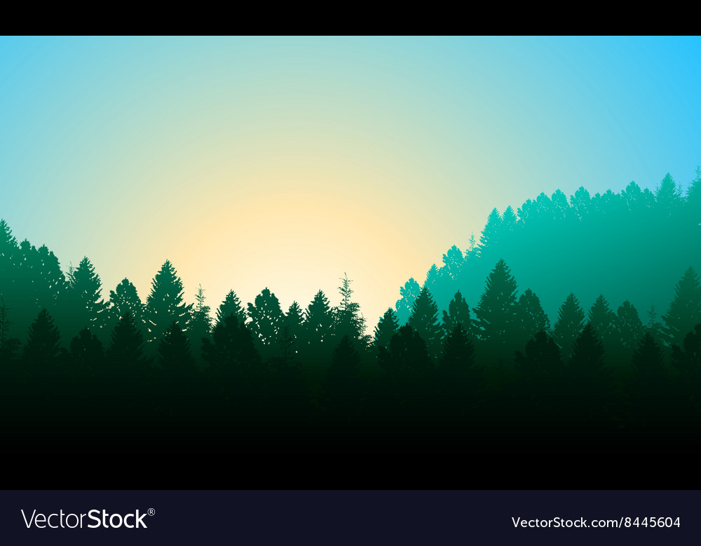 Morning forest background with pines sky and sun vector