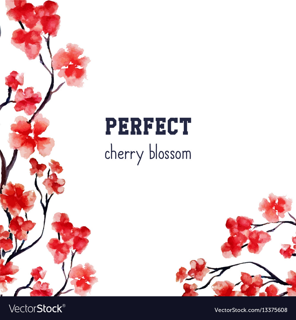 Realistic sakura blossom  japanese red cherry vector