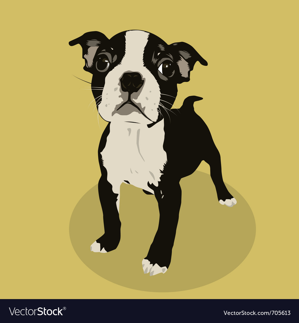 Boston terrier vector