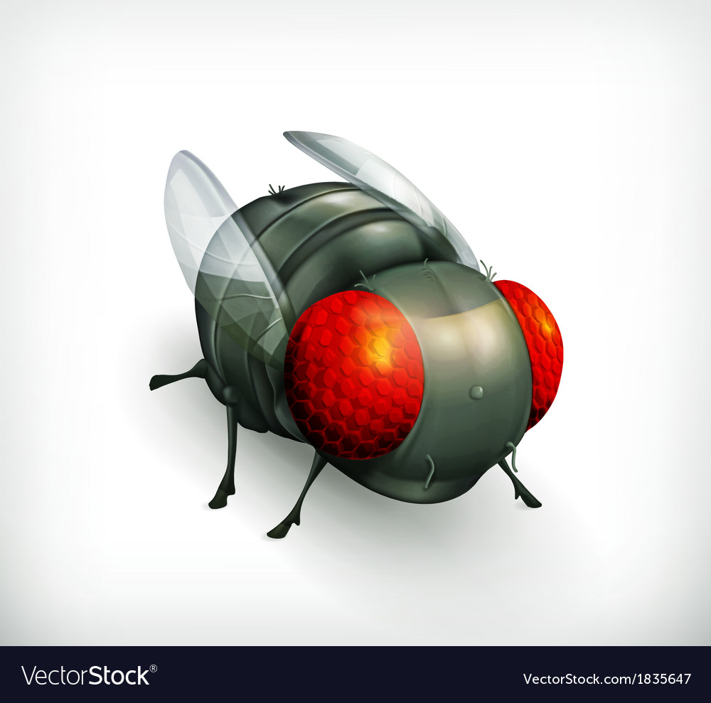 Fly icon vector