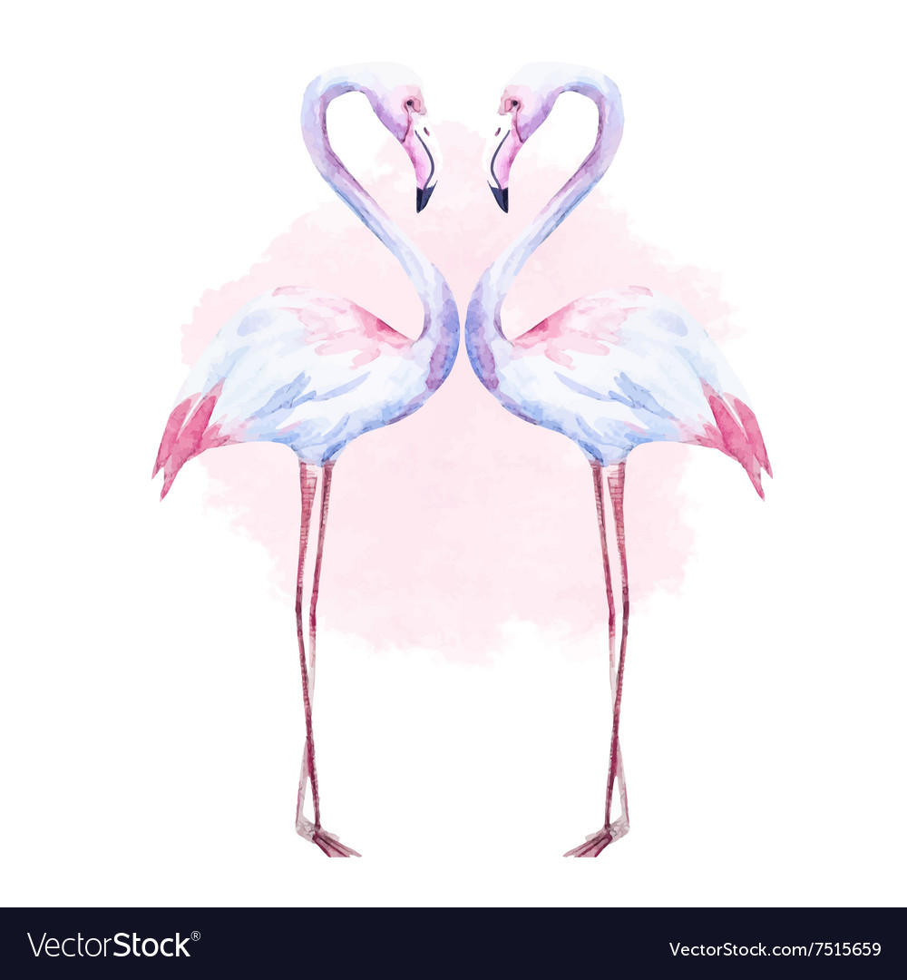 Nice watercolor flamingo vector