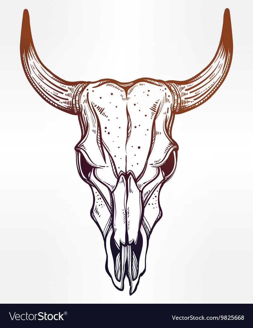 Hand drawn romantic style cow or bull skull vector