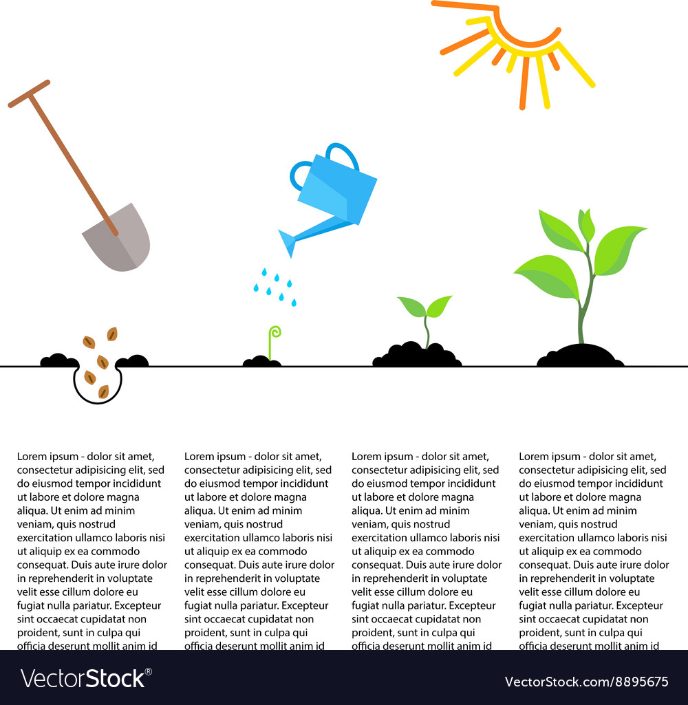 Timeline infographic of planting tree process vector