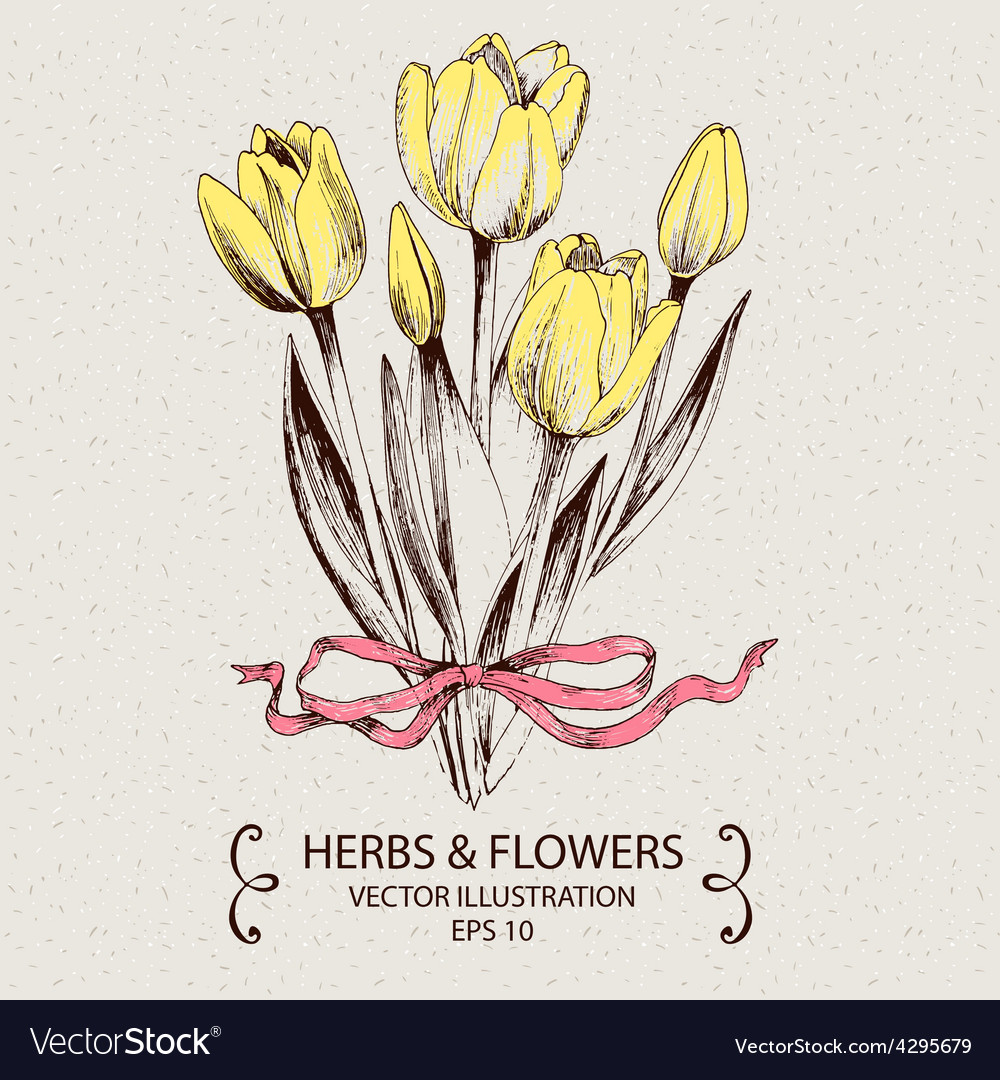 Yellow tulips vector