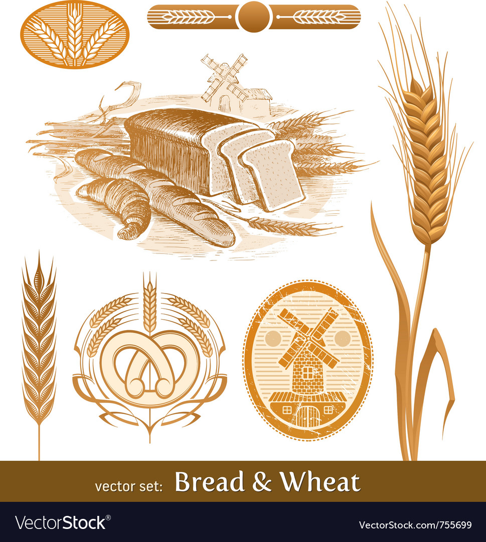 Set  bread and wheat vector