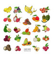 exotic tropical fruits hand drawn set collection vector image
