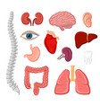 human organ isolated icon set for anatomy design vector image vector image
