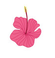 pink hibiscus tropical flower hand drawn vector image