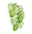 floral decorative ornament vector image vector image