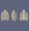 Human Rib Cage Skeletal Anatomy Pack vector image vector image