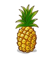 Pineapple Isolated On White vector image
