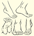 feet drawings vector image