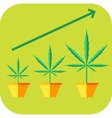 Marijuana vegetative icon vector image