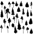 set of conifer trees vector image vector image