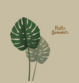 tropical palm monstera leaves hello summer vector image