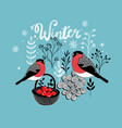 two winter birds with the basket of berries vector image vector image