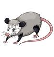 Opossum vector image vector image