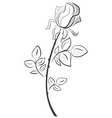 Rose in hand drawn style vector image vector image