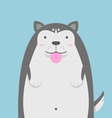 Cute big fat Siberian Husky dog vector image