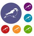 bullfinch icons set vector image