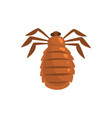louse insect parasite cartoon vector image